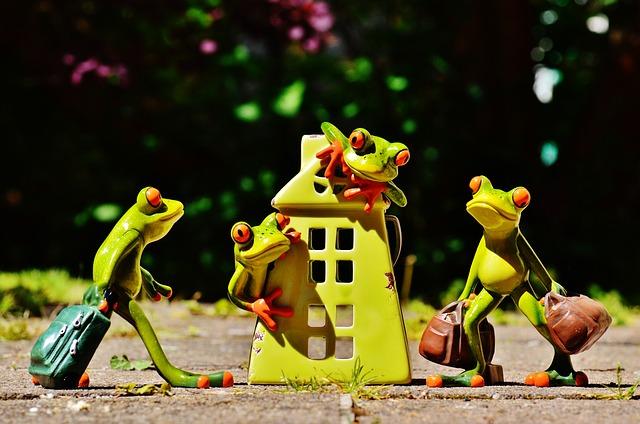 žáby v domě, příjezd, stěhování